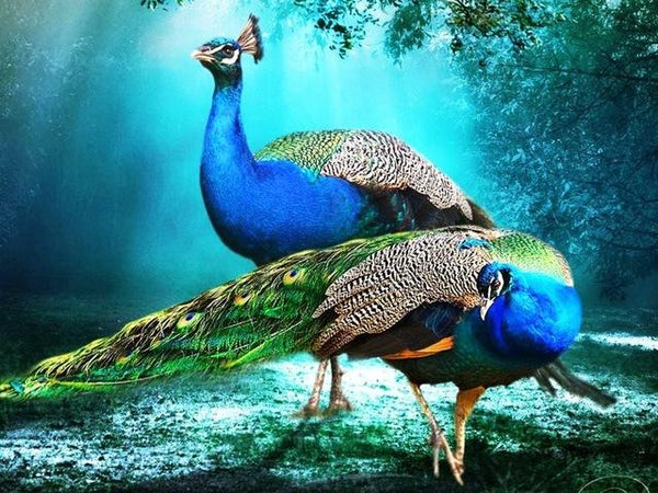 2019 5d Diy Diamond Painting Kits Peacock Needlework VM9142