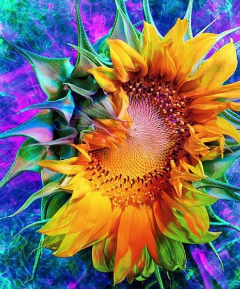 2019 5d Diy Diamond Painting Kits Colorful Sunflower Cheap VM77010