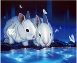 2019 5D Diy Diamond Painting Kits Animal Rabbit VM90407