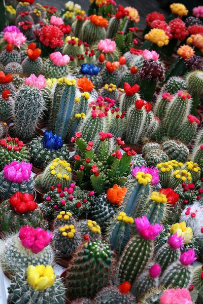 5D Diy Diamond Painting Kits Plant Cactus NA10383
