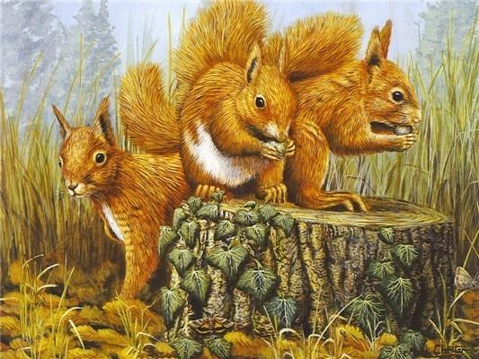 2019 5d Diy Diamond Painting Kits Squirrel NA00459
