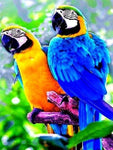 2019 5D Diy Diamond Painting Kits Cute Parrot NA0099
