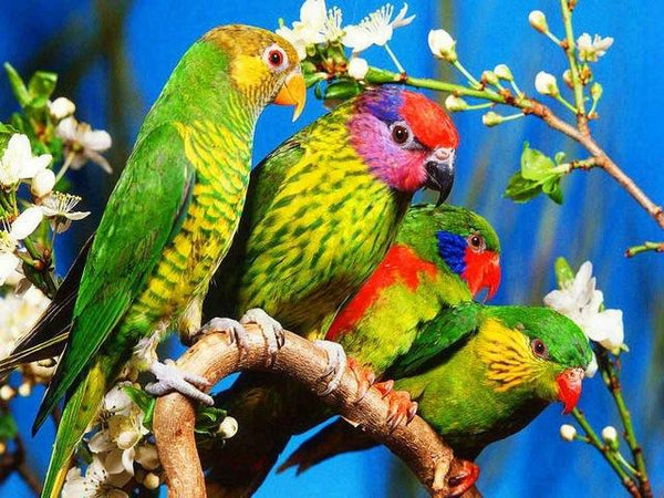 Hot Sale Full Square Drill Cute Parrot 5D Diy Cross Stitch Diamond Painting Kits NA0100