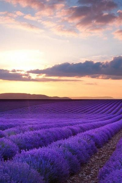 For Beginners Lavender Fields 5D Diy Diamond Painting Kits NA00357