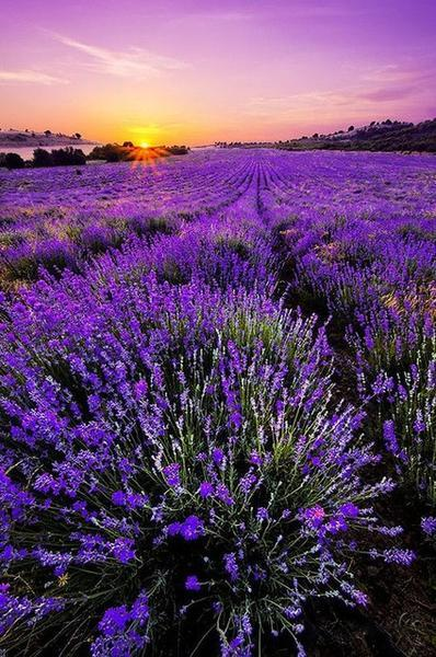 2019 5D Diy Diamond Painting Kits Lavender Fields NA0355