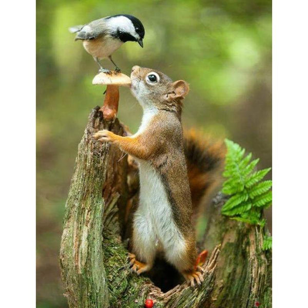 2019 5D Diy Diamond Painting Squirrel And Bird VM90022