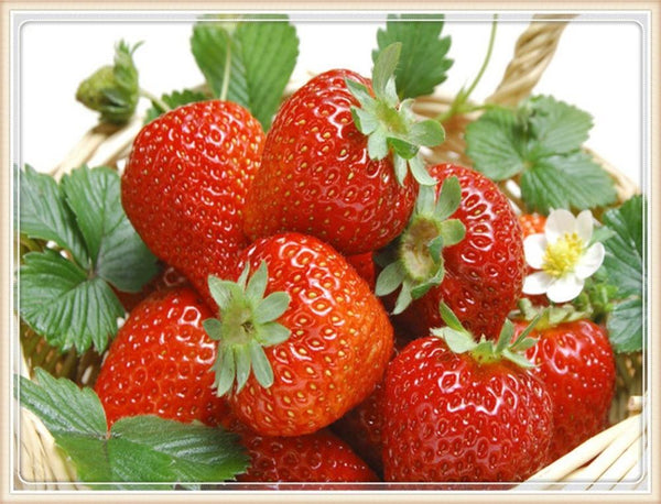 2019 5D Diy Diamond Painting Kits Fruits Strawberry VM90173