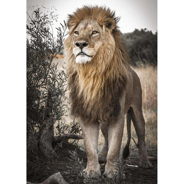 5d DIY Embroidery Diamond Painting Animal Lion VM90795