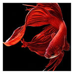Modern Art Special Mosaic Cross Stitch Red Fish Diy 5d Diamond Painting Kits QB5120