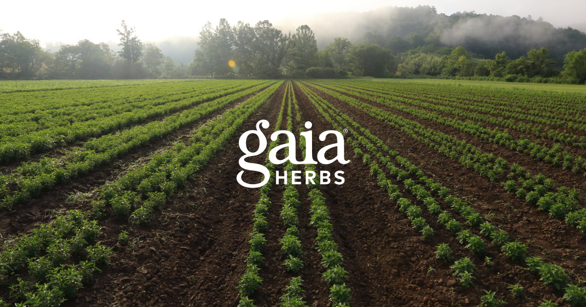 Gaia Herbs® Official Site: Herbal Supplements & More
