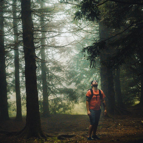 Man walking in woods looking up at trees