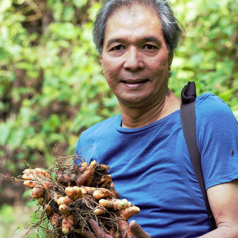 Gaia Herbs sourcing partner holding raw turmeric herb