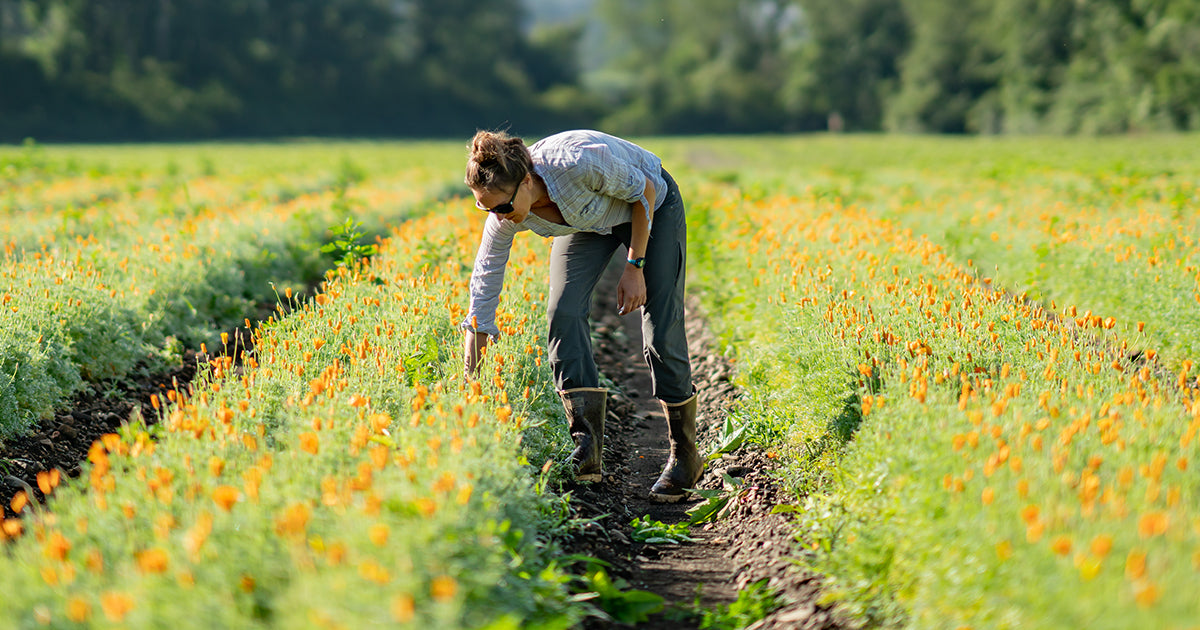 Gaia Herbs Assistant Farm Manager in fields