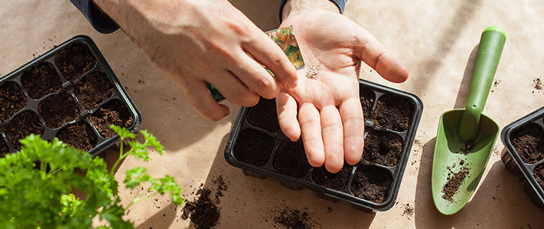 man holding seeds in hand to start garden