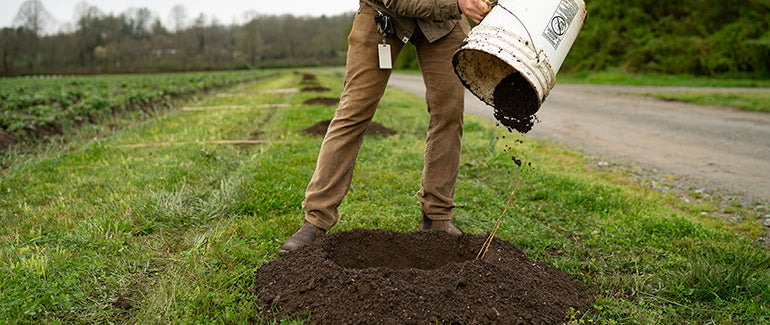 Thomas Leonard adds organic compost and matter to tree hole.