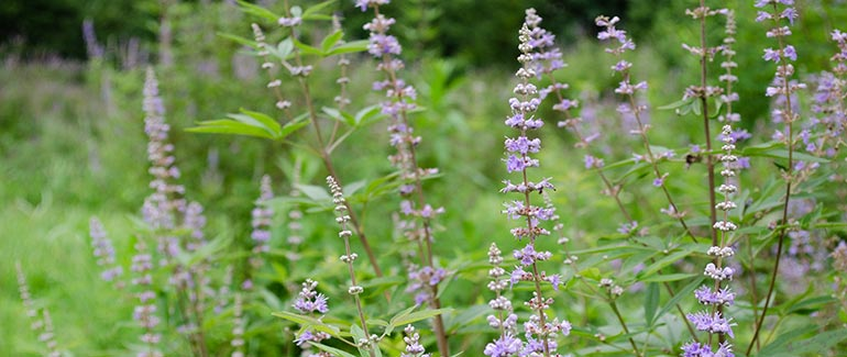 Herbs to Support Female Hormone Balance Through All Life