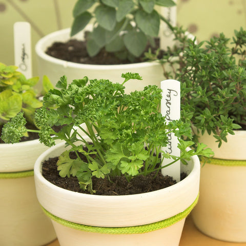 herbs in pots on table