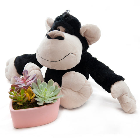 Gorilla with Succulent