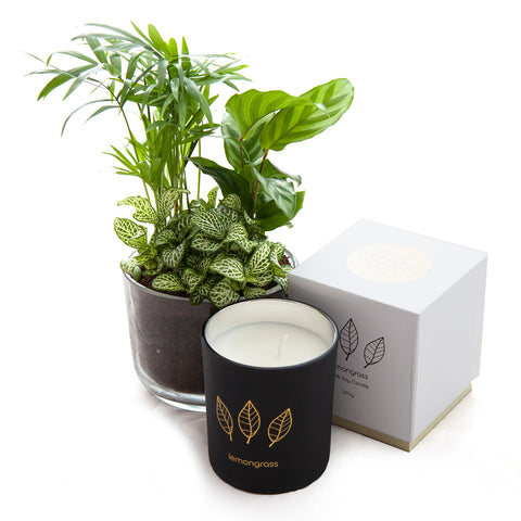 Green Oasis Candle Set