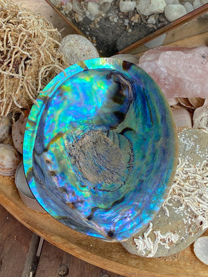 ABALONE RAINBOW SHELL | PERFECT FOR SAGE BOWL
