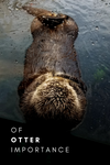 OF OTTER IMPORTANCE | Behind the Design