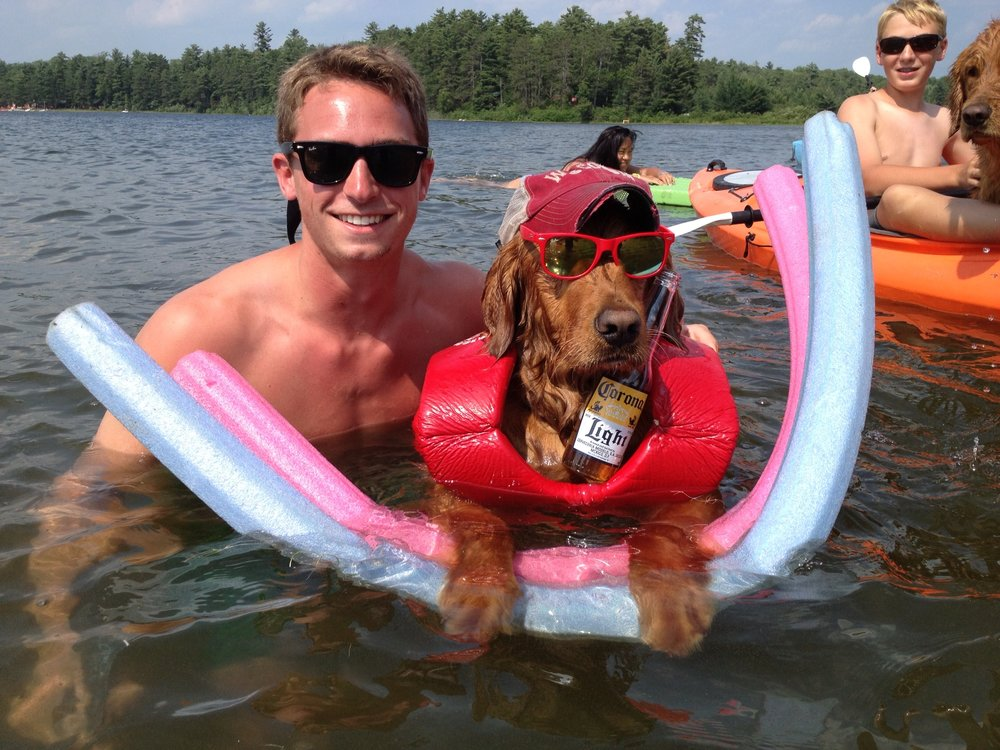 dog wearing sunglasses swimming in the lake
