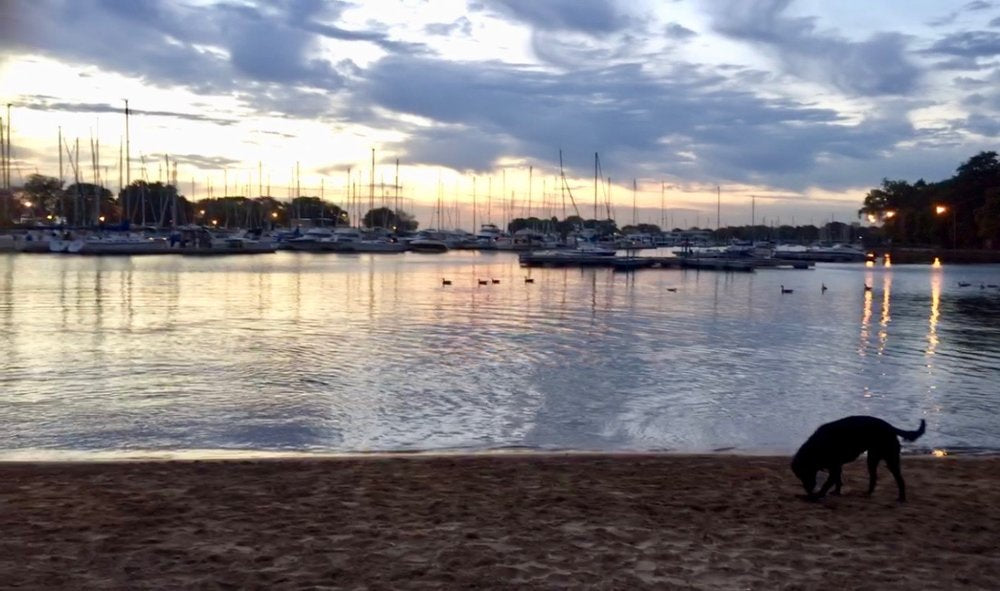 sunset in the boat harbor