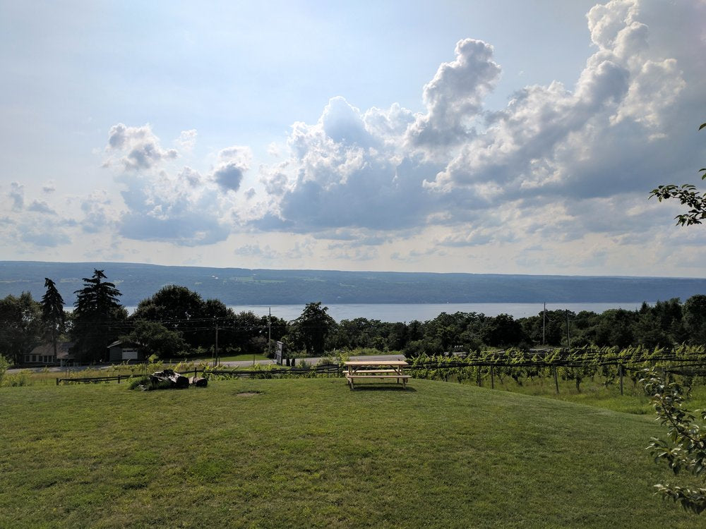 vineyard overlooking the finger lakes