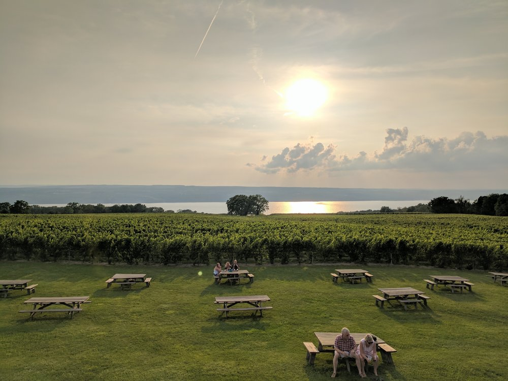 sunset on the vineyard in finger lakes new york