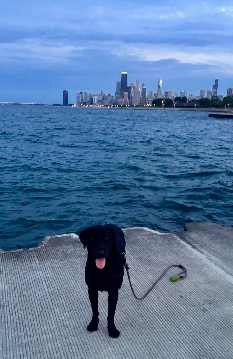 running with dog by the lake in chicago illinois