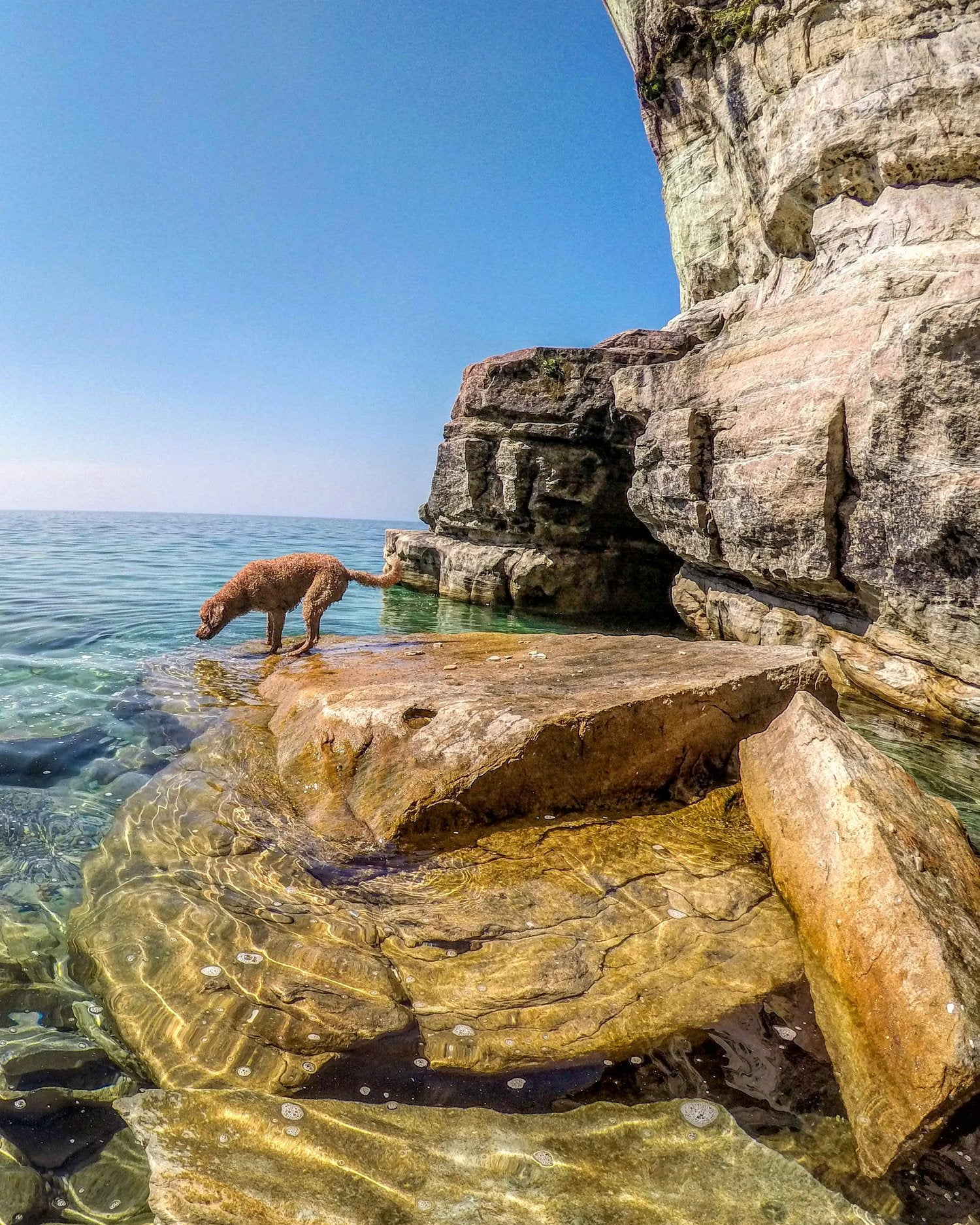 dog swimming at pictured rocks michigan