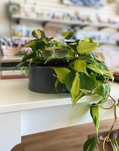 PLANTS - SHOP PICKUP ONLY