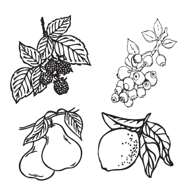 Seed Packet Fruits