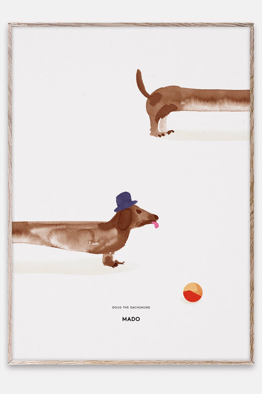 Doug the Dachshund - 50x70 Poster