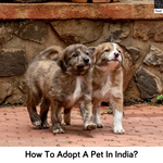 How To Adopt A Pet in India?