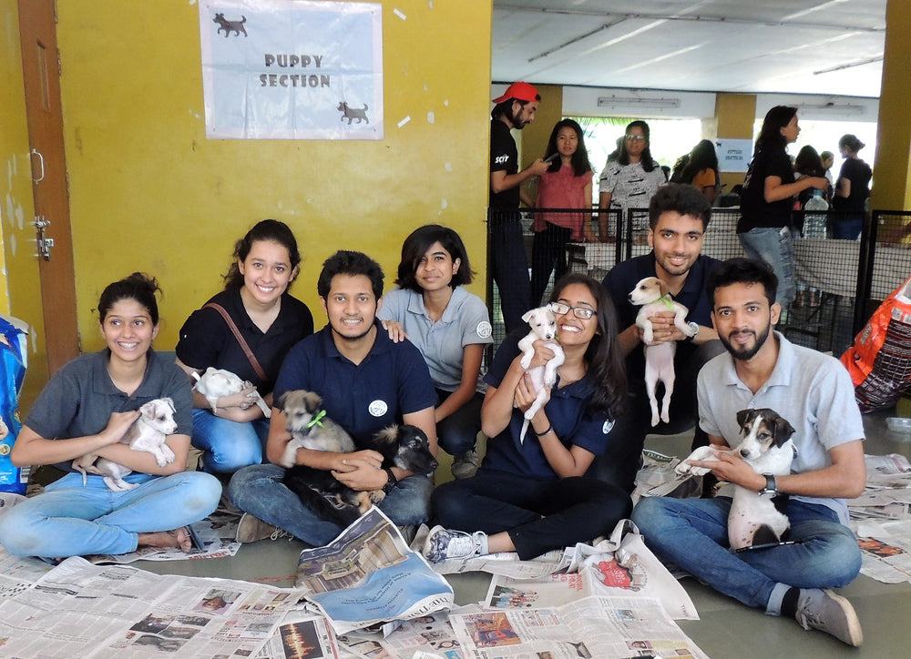 Adoption Camp For Kittens and Puppies in Pune