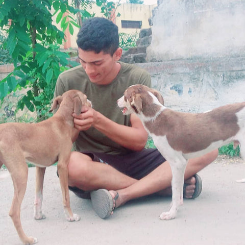 Man with stray dogs