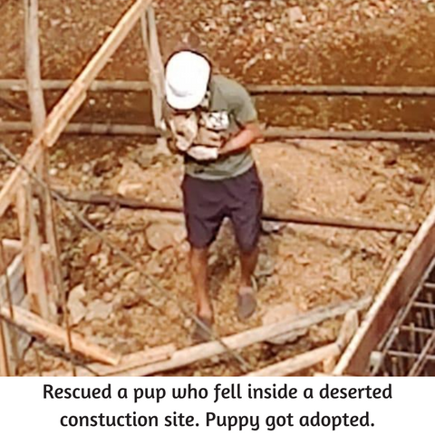 puppy rescued from construction site