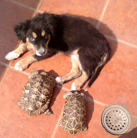 Caesar with tortoises