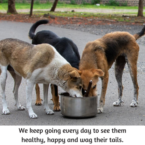 stray dogs eating food