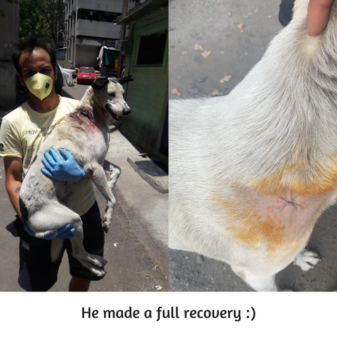 dog rescued and recovered
