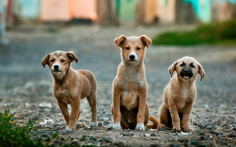 Stray puppies standing on the road