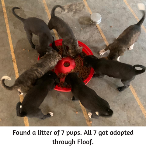 seven puppies eating