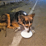 Sponsor meals and medicines for strays in India
