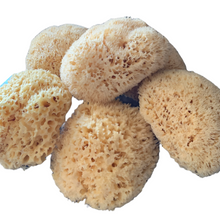 Load image into Gallery viewer, Natural Sea Sponge 17 to 18cm