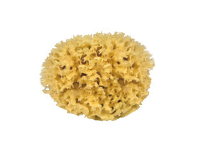 Natural sea sponge 15cm sustainable med