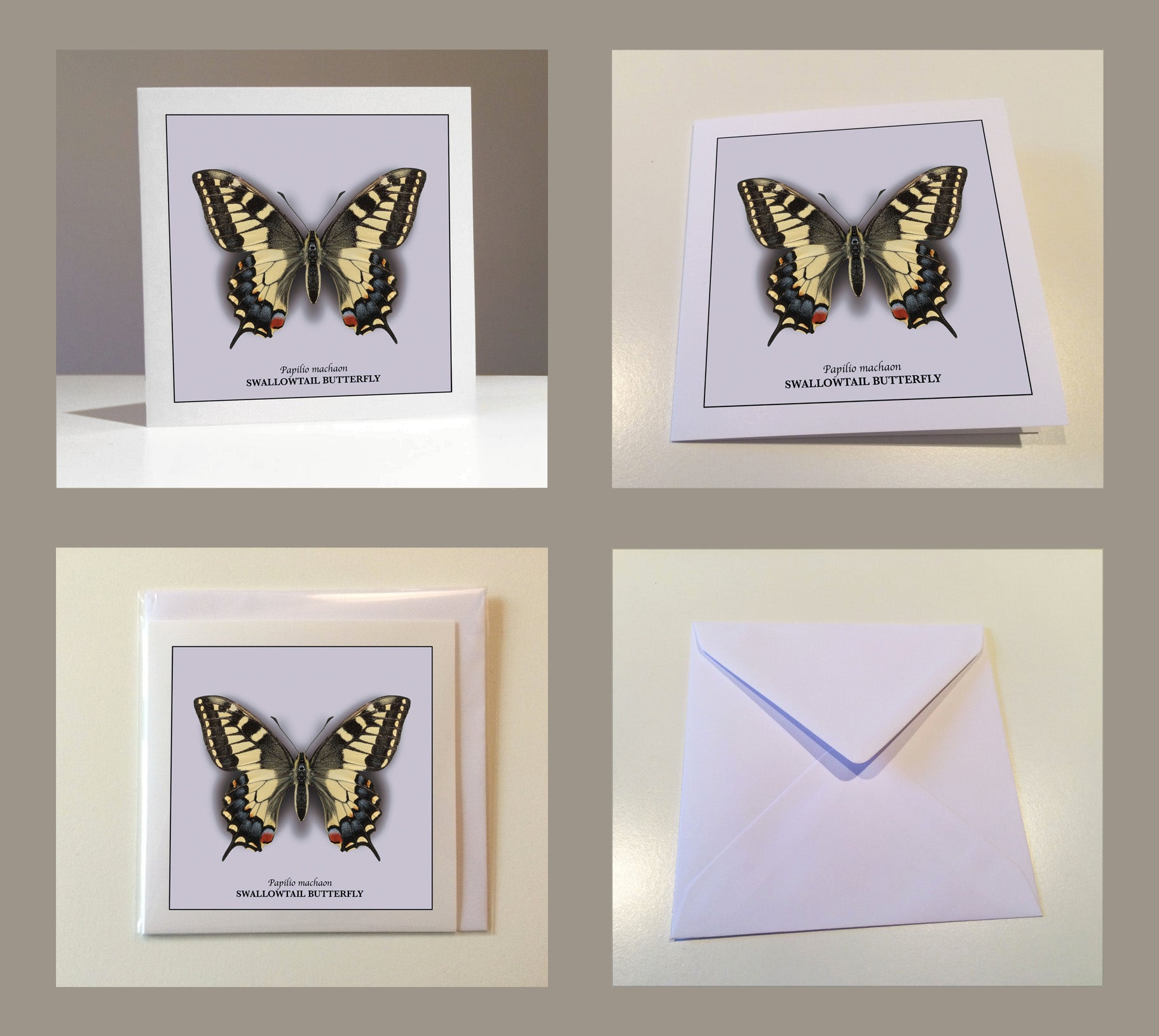 Butterfly Greetings Cards (Pack of 8)
