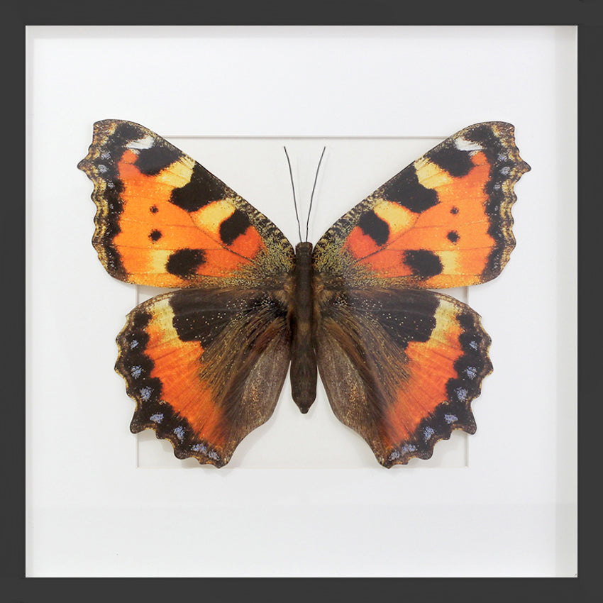 3D, Printed, Tortoiseshell Butterfly - XL only
