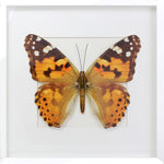 3D, Printed, Painted Lady Butterfly - Vanessa cardui