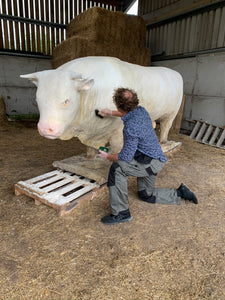 Huge plaster model of a Charolais bull